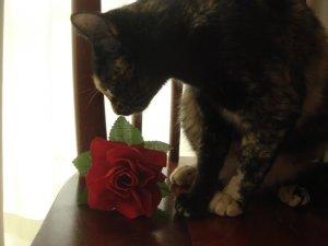 sophie e a rosa