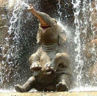 elefante-agua